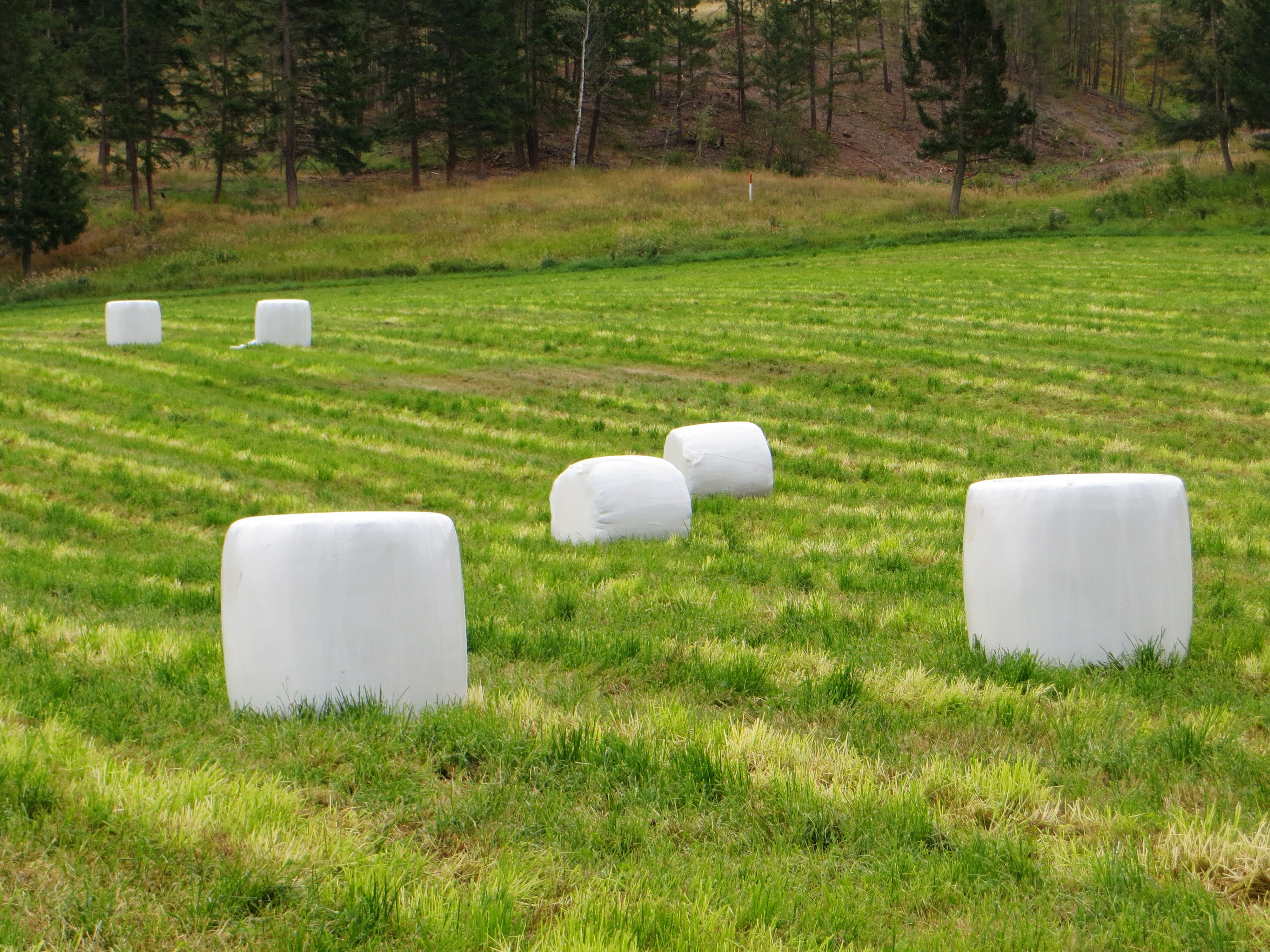 Marshmallow field hay bales